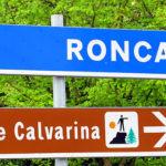 RoncaCiclaminoU